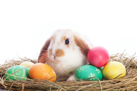 bunnie: Funny little rabbit and easter eggs isolated on white background