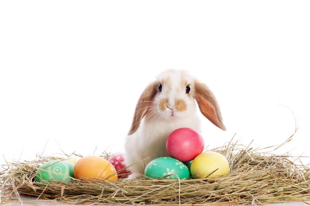 pygmy: Funny little rabbit among Easter eggs in velour grass isolated on white