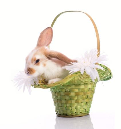 bunnie: Little sleepy rabbit in green basket isolated on white Stock Photo