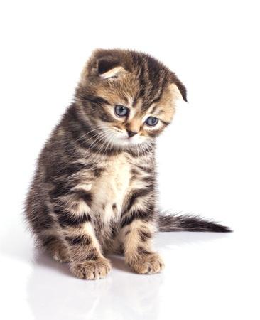 Triste petit chaton isolé sur fond blanc Banque d'images