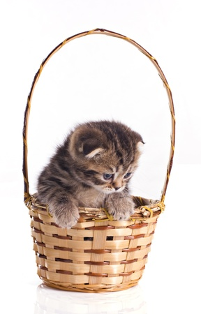 little kitten in the basket isolated on white photo