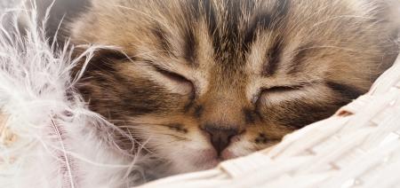 Closeup portrait of sleeping adorable kitten photo