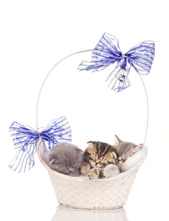 multicolored kittens sleep in beautiful basket isolated on white photo