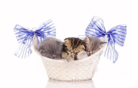 multicolored kittens sleep in  basket isolated on white photo