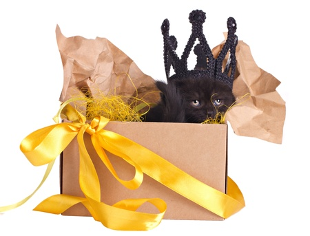black kitten in a crown sitting in a box set isolated on white photo