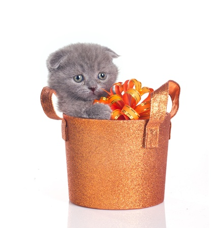 funny little kitten in a shiny basket holding gift bow isolated on white photo
