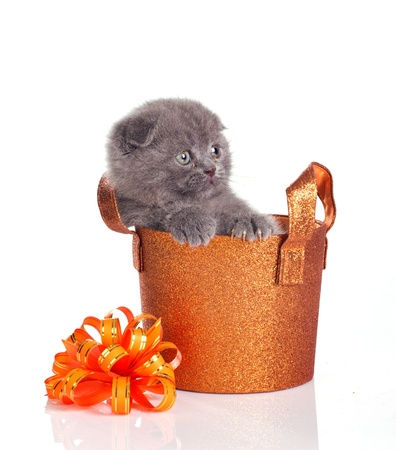 funny grey kitten in shiny gift basket isolated on white background photo
