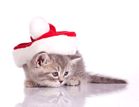 little kitten in costume of santa claus isolated on white photo