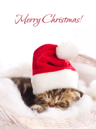 beautiful kitten in santa claus cap sleeping in basket on white background