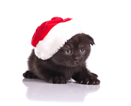 christmas costume: beautiful black kitten in red hat celebraiting christmas isolated on white