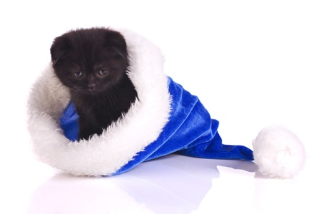 black kitten in blue cap  is the  present at christmas isolated on white Stock Photo - 16316706