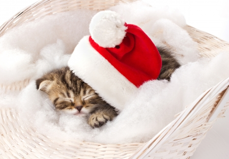 furry kitten in red cap of santa sleeping on furry mat in basket on white background photo