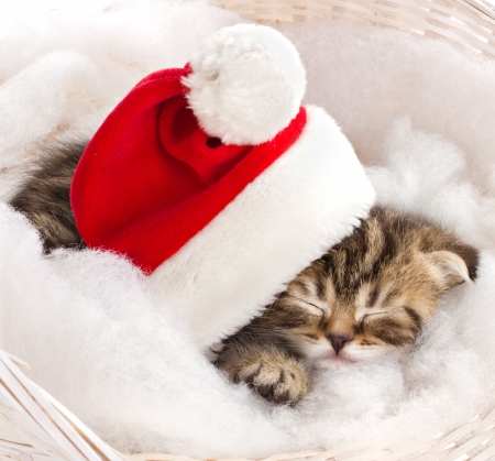little kitten in red cap of santa sleeping on furry mat in basket photo