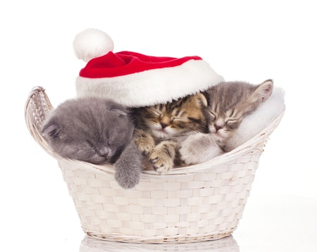 cat sleeping: Three  little cats in red cap of santa sleeping in basket isolated on white