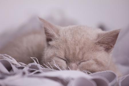 sleeping buff cat on textile mat jn light unfocused background Stock Photo - 16910660