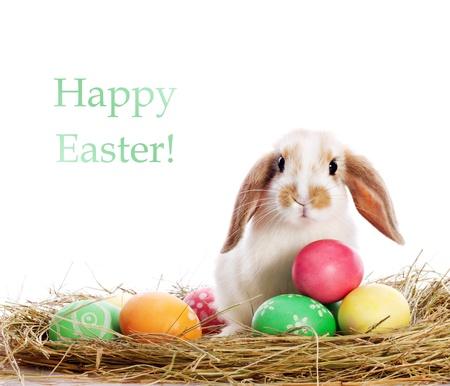 bunny ears: Funny little rabbit among Easter eggs in velour grass isolated on white