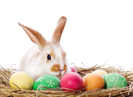 Easter bunny sitting among multicolored eggs isolated on white