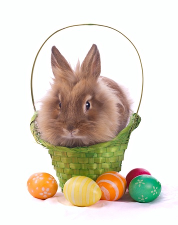 fancy rabbit in the basket and easter egss isolated on white Stock Photo - 17216065