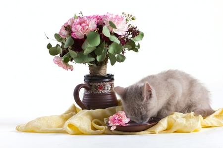 canny: composition of a gray kitten, and bunch of flowers on silk isolated on white