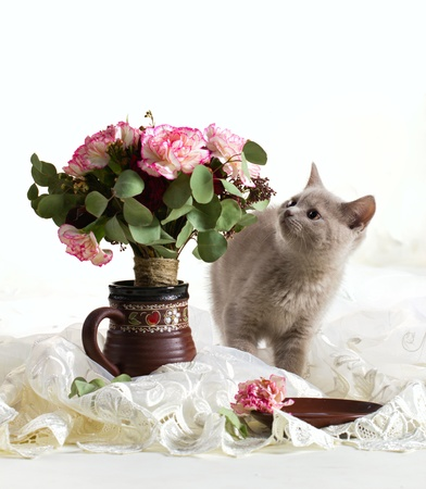 little gray kitten look at bouquet of flowers on  cloth and white  background photo