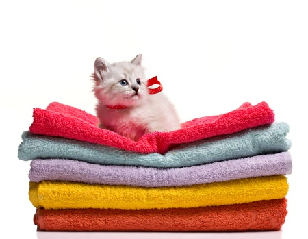 funny grey kitten with ribbon siting on stack of colorful towel isolated on white photo