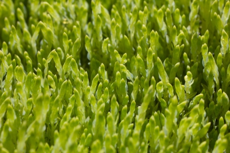 closeup of sunny green moss, texture photo