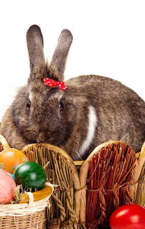 furry brown bunny in straw nest looking at camera and many easter colorful eggs in basket on white background photo