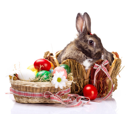 furry brown with white spot bunny in straw nest,  many easter colorful eggs and flower in basket   on white background photo