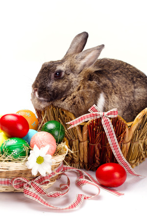 furry brown with little white spot bunny in straw nest,  many easter colorful eggs and camomile in basket with bows on white background photo