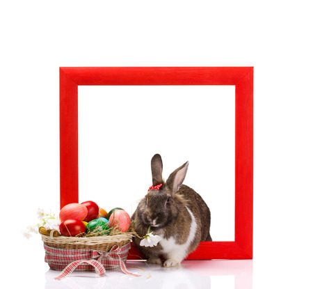 brown and white bunny in red frame, near -  colorful eggs in decorated basket isolated on white photo