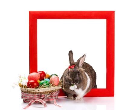 brown and white rabbit in red frame, near -  colorful eggs in basket isolated on white photo