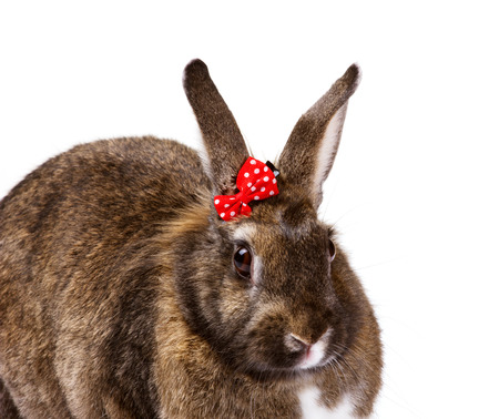 closeup portrait of a cute beige bunny with small red bow on white background photo