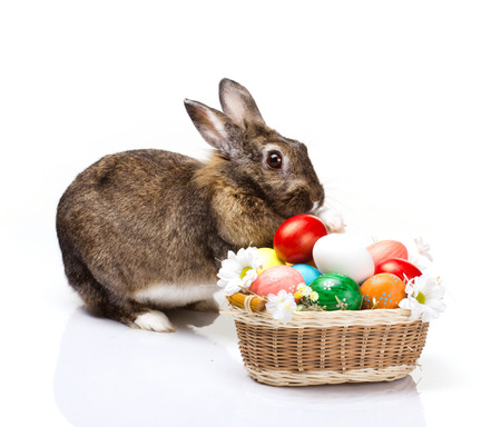 funny brown with white spot bunny with  many easter colorful eggs grass and flowers in basket, isolated on white  photo