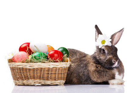 funny brown bunny with chamomile on head with  many easter colorful eggs in basket, on white background photo