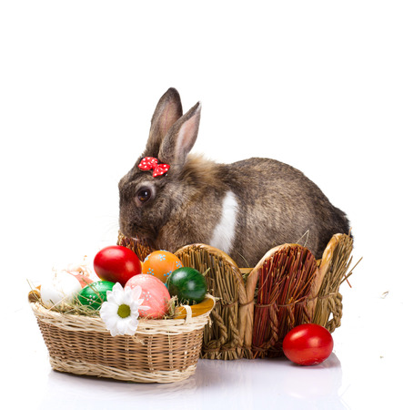 furry brown bunny  with red small bow in straw nest,  many easter colorful eggs and chamomile in straw basket isolated  on white  photo