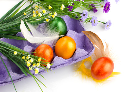 easter colorful eggs in violet tray, yellow and lilac  flowers and colorful feather on white background photo