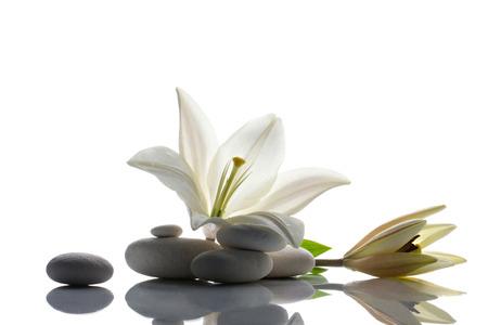 신선도 흰색 백합 흰색 리플렉션 배경에 꽃 봉 오리와 l 흰색 돌 스톡 콘텐츠 - 30301040