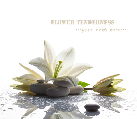 spa still life with white lily, stones and water drop on white bright table on white background Standard-Bild