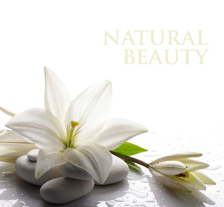鮮度白いユリの芽に白い背景の上にいくつかの白い石 写真素材