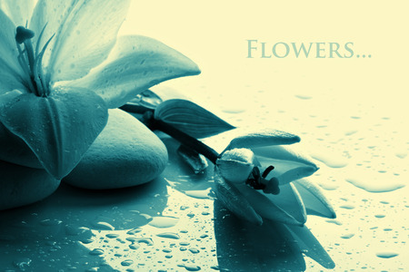 art therapy: freshness blue lily with  stone on white old background, monochome vintage style  Stock Photo