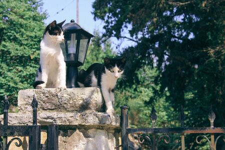 twin cat on the gate wall