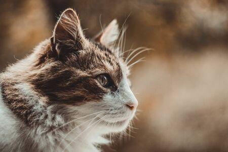 cat portret