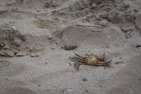 Dead crab on the beach