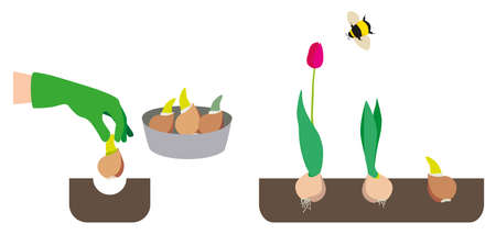Illustration on the theme of gardening. Planting plants. planting of bulbs, tulips, flowers. Rest and work in the garden
