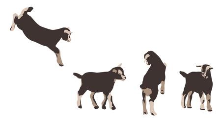 ruminant: baby goats - design elements Illustration