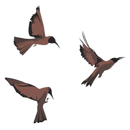 oiseau - les éléments de conception