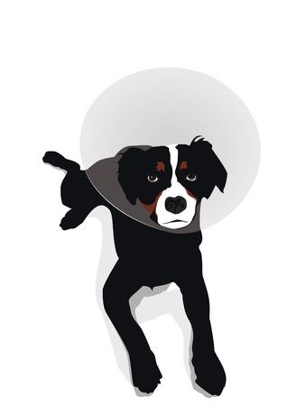 elizabethan: dog wearing elizabethan collar, illustration