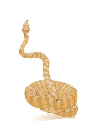 Albino Python  Vector