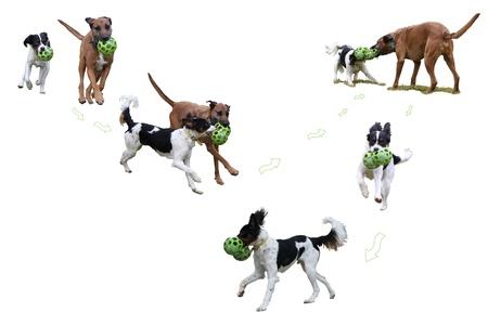 perros jugando: dos perros jugando etiqueta