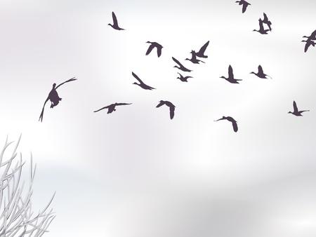 pato real: skyscape de invierno con �nades